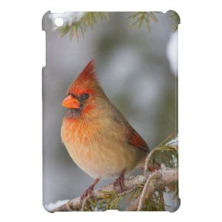 Northern Cardinal female in spruce tree in winter iPad Mini Cover