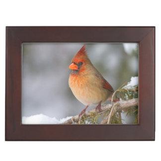 Northern Cardinal female in spruce tree in winter Keepsake Box
