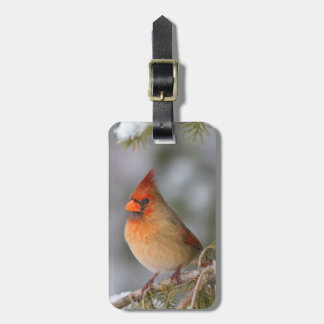 Northern Cardinal female in spruce tree in winter Luggage Tag