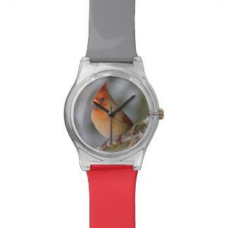 Northern Cardinal female in spruce tree in winter Wrist Watch