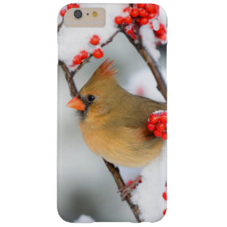 Northern Cardinal female on Common Winterberry Barely There iPhone 6 Plus Case
