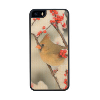 Northern Cardinal female on Common Winterberry Carved® Maple iPhone 5 Case