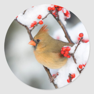 Northern Cardinal female on Common Winterberry Classic Round Sticker