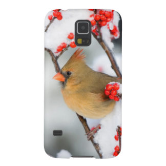 Northern Cardinal female on Common Winterberry Galaxy S5 Cover