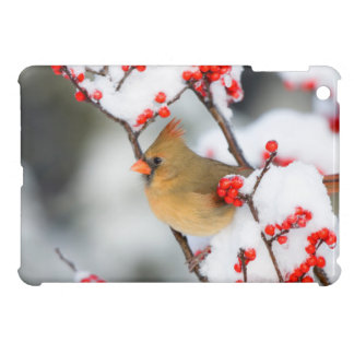 Northern Cardinal female on Common Winterberry iPad Mini Cases