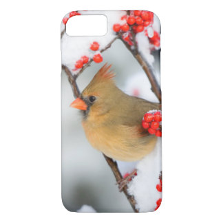 Northern Cardinal female on Common Winterberry iPhone 7 Case