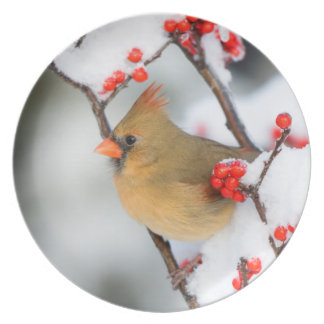 Northern Cardinal female on Common Winterberry Plate