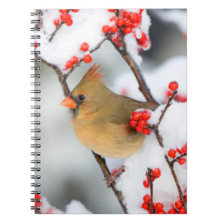 Northern Cardinal female on Common Winterberry Spiral Notebook