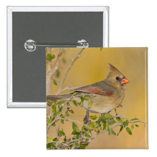 Northern Cardinal female perched on branch 15 Cm Square Badge