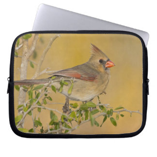 Northern Cardinal female perched on branch Laptop Computer Sleeve