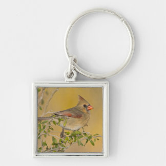 Northern Cardinal female perched on branch Silver-Colored Square Key Ring