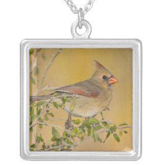 Northern Cardinal female perched on branch Silver Plated Necklace