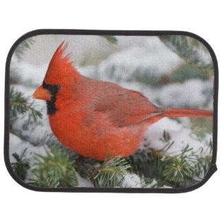 Northern Cardinal in Balsam fir tree in winter Car Mat