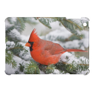Northern Cardinal in Balsam fir tree in winter Cover For The iPad Mini