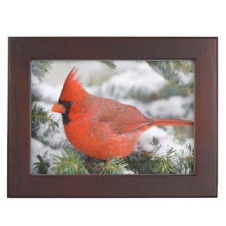 Northern Cardinal in Balsam fir tree in winter Keepsake Box