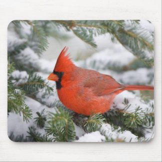 Northern Cardinal in Balsam fir tree in winter Mouse Mat