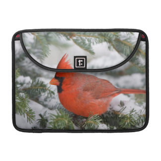 Northern Cardinal in Balsam fir tree in winter Sleeve For MacBook Pro