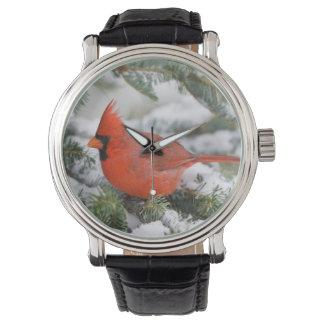 Northern Cardinal in Balsam fir tree in winter Wristwatch