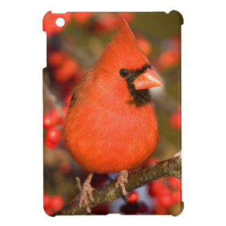 Northern Cardinal in Common Winterberry Case For The iPad Mini