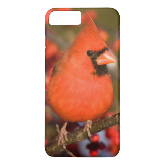 Northern Cardinal in Common Winterberry iPhone 8 Plus/7 Plus Case