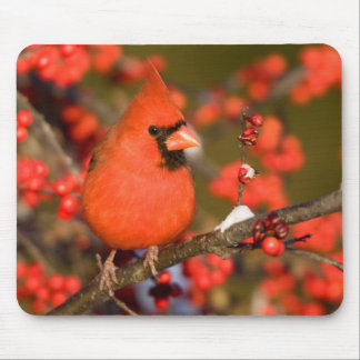 Northern Cardinal in Common Winterberry Mouse Mat