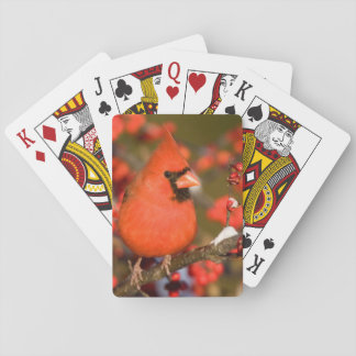 Northern Cardinal in Common Winterberry Playing Cards