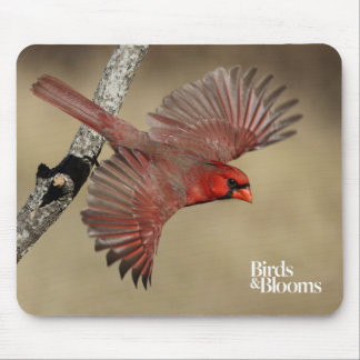 Northern Cardinal In Flight Mouse Mat