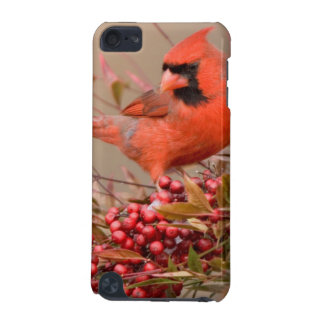 Northern Cardinal in Nandina Heavenly Bamboo iPod Touch 5G Case