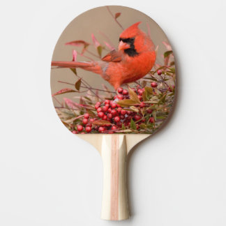 Northern Cardinal in Nandina Heavenly Bamboo Ping Pong Paddle
