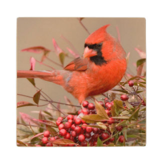 Northern Cardinal in Nandina Heavenly Bamboo Wood Coaster