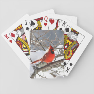 Northern cardinal in the snow playing cards