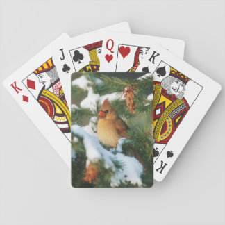 Northern Cardinal in tree, Illinois Playing Cards