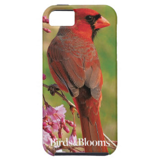 Northern Cardinal iPhone 5 Cover