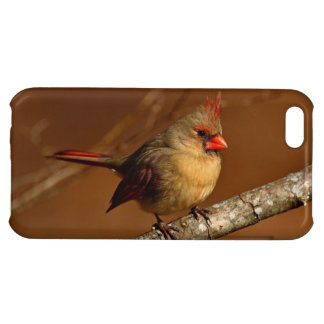 Northern Cardinal iPhone 5C Cover