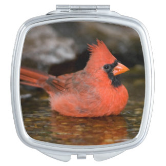 Northern Cardinal male bathing Compact Mirror
