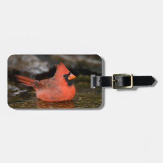 Northern Cardinal male bathing Luggage Tag