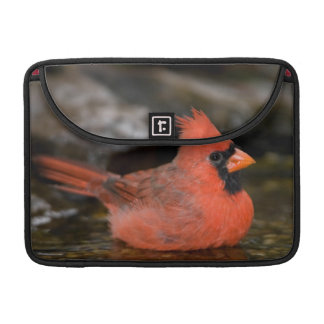 Northern Cardinal male bathing Sleeve For MacBook Pro