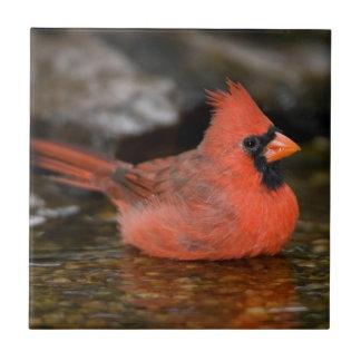 Northern Cardinal male bathing Tile