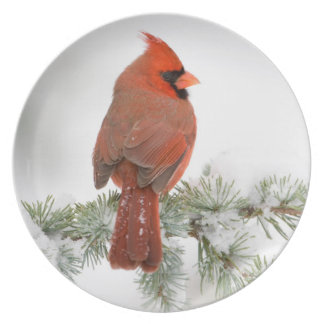 Northern Cardinal male on Blue Atlas Cedar Plate