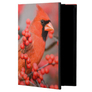 Northern Cardinal male on Common Winterberry iPad Air Cover