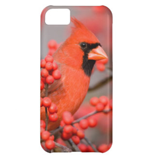 Northern Cardinal male on Common Winterberry iPhone 5C Case