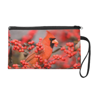 Northern Cardinal male on Common Winterberry Wristlet