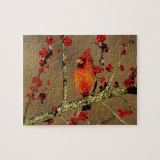 Northern Cardinal male perched, IL Puzzle