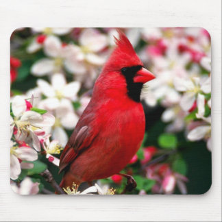 Northern Cardinal Mouse Mat