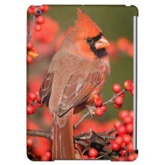Northern Cardinal on Common Winterberry