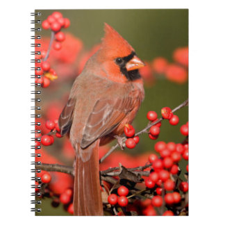 Northern Cardinal on Common Winterberry Notebook