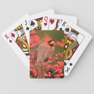 Northern Cardinal on Common Winterberry Poker Deck
