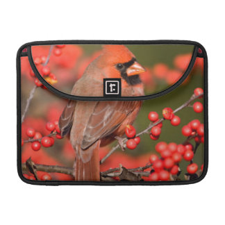 Northern Cardinal on Common Winterberry Sleeve For MacBooks