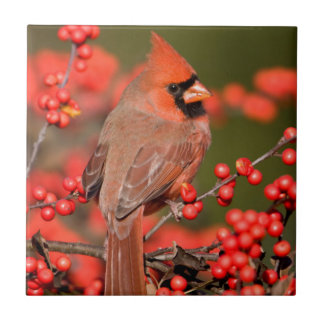 Northern Cardinal on Common Winterberry Tile
