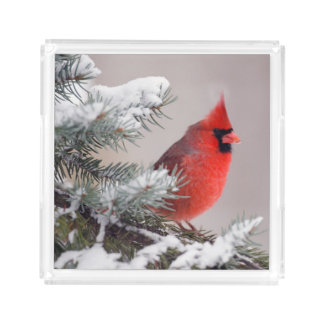Northern Cardinal Perched In A Tree Acrylic Tray